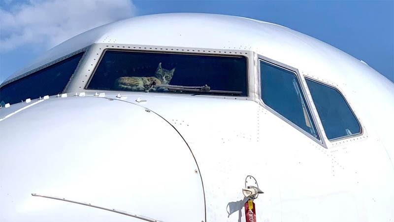 Gato encerrado dentro de un avión